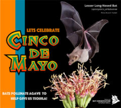 Would there be Cinco de Mayo without bats?